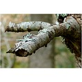 tree branch wood timber nature