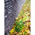 autumn leaves wall Prague Bohemia