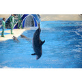 seaworld orlando florida show entertainer dolphins