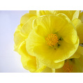 flores flowers amarillo yelow