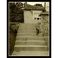 doorstep cat tree bush fence house wall window roof sky clouds sepia
