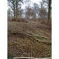 coppicing bury worcestershire wood hazel