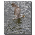 netherlands diemen animal bird gull nethx diemx animx birdx gullx