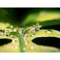 dew drops green fern nature