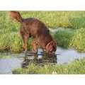 Dog Dogs Animal Animals Water