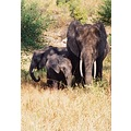 Elephant Family, Kenyan Safari Tour 2001