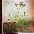 flower pink window raindrops