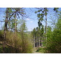 Forest Trees TV tower ladscape spring