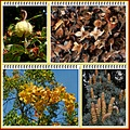 autumn colours october 2013 collage