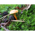 Series Mushrooms Nature Autumn