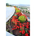 Flower Bed at Hawatmehs