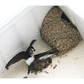 bird house martin looks like theirs not enough room in the one nest lol