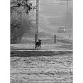 road street tree bush pylon winter snow mist dog car bw