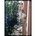 rosemary skeleton