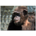 There was a lot of PS work on this photo, cause this monkey was behind some blue bars and I had t...