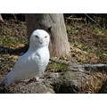 A snow owl ... just a few pics from our trip to the zoo yesterday