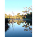 reflectionthursday sunrise farm dam perth hills morning littleollie