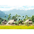The Western region of Nghe An is rich and diversity in natural potentalities, includes forested...