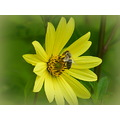 nature flower wasp