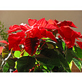 red green plant flower garden terrace home alora malaga andalucia spain