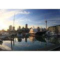 viaduct harbour downtown auckland skytower