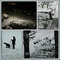 sunday night snow monday morning collage