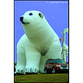 stlouis missouri us usa animal polarbear balloon originalfriday bh 2008