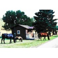 Blackhills horses campground