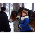 winter snow pine tree man woman horse