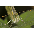 Hi all, I have been away for some time, but I was still making (insect) photos. This is a portrai...