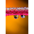 macro closeup drop droplet water flower reflection