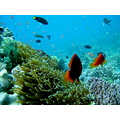 finding nemo part 2 :D