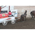 pony down in chuckwagon races