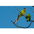 time out birds rainbow lorikeets yard home perth littleollie