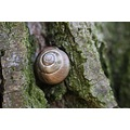 snail house tree macro