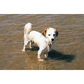 doggydo dog beach france scanned