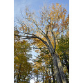 upstate newyork road autumn fall foliage fabius park trees