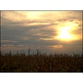 landscape field corn sky clouds sunset