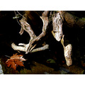 nature scenery river tree roots