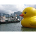 hongkong harbour rubber duck