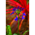 flower tweak red blue green