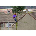 TREE SERIES!!!  