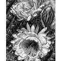 cactus flower bw graphic smarted pankey wildspirit