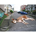 fun urban photoshop street dog