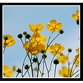 yellow flowers flower nature burnhamonsea somerset somersetdreams