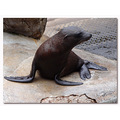 netherlands emmen zoo sealion nethx emmex zoox animx sealx