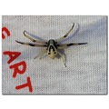 spider art tshirt nature insect