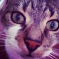 Instagram cat beautiful feline pet love eyes
