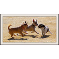 Dog Park Indy Frolic animal pankey wildspirit pet
