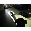 kitten dog shadow pets